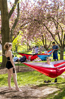 Students in hammocks on campus.