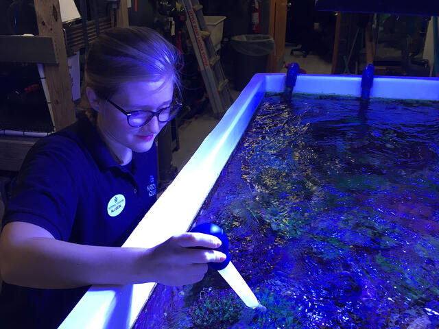Allison Parker gathering real-world experiences and exploring careers at the famed National Aquarium.
