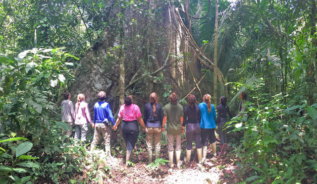 Forest Online students enjoy a giant kapok tree at Lake Soledad on the Las Piedras River, Peru.