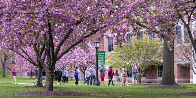Students walking across campus in Spring.